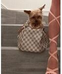 LOUIS VUITTON | (Handbag)