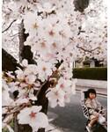 🌸桜とお熱の娘🌸 | (その他)