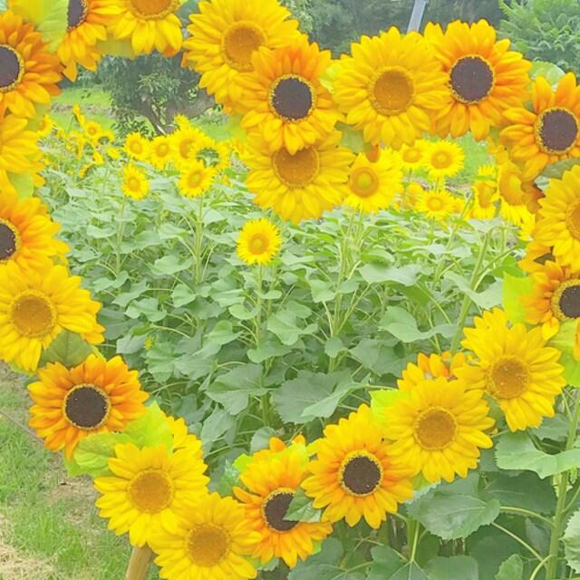 フェルトで作る花アイデア10選|コサージュとアクセサリー